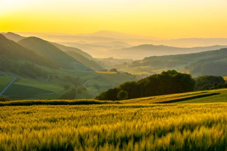 Goldiger Sonnenaufgang Staffelegg