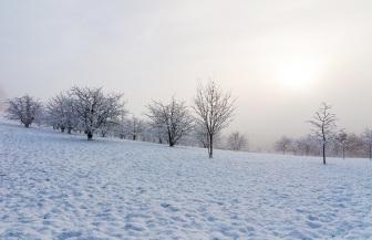 Obstplantage im Winter