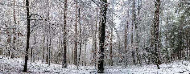 Winterlicher Wald