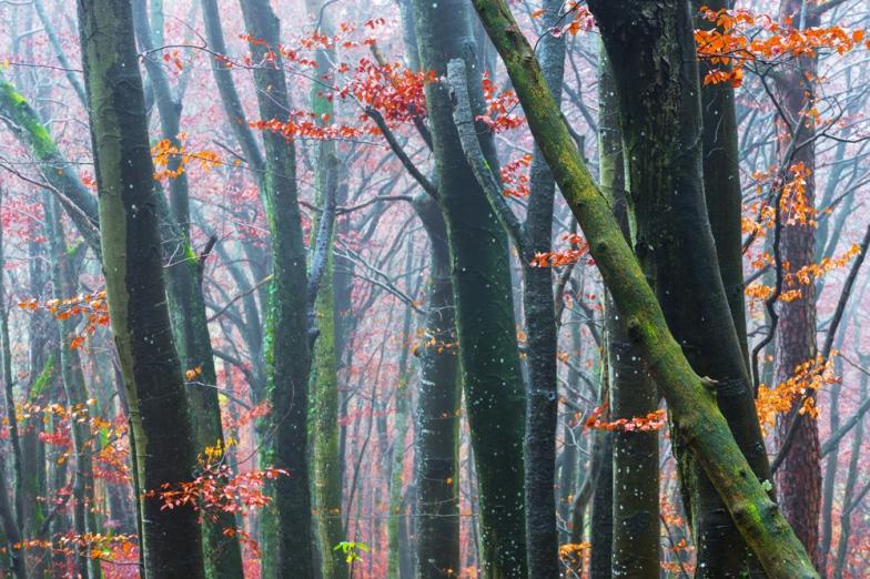 Herbstende im Wald, Aargau