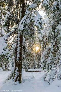 Sonnenblick im Wald