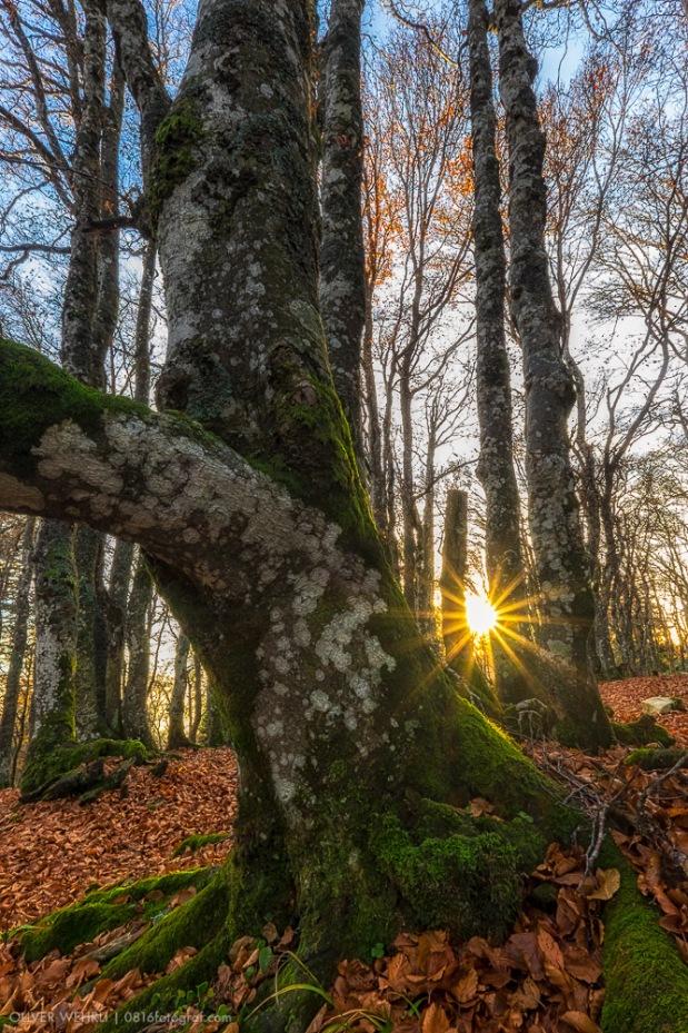 Grenchenberg, Baum, Herbst, Gegenlicht, Sonne, Fuji,