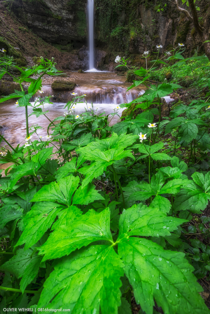 Sagimülitäli, Wasserfall Linn, Aargau