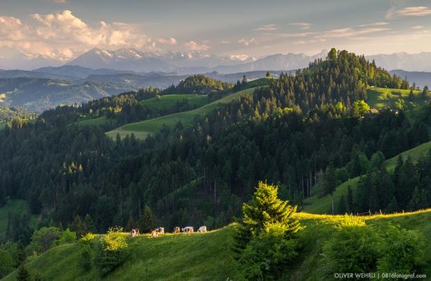 Lüderenalp, Luederenalp, Kuh, Kühe, Emmental, Hügellandschaft, Wasen i. E., Abendlicht