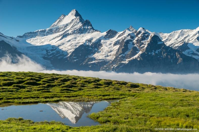 Schreckhorn, Berner Oberland, Berner Alpen, First, Grindelwald