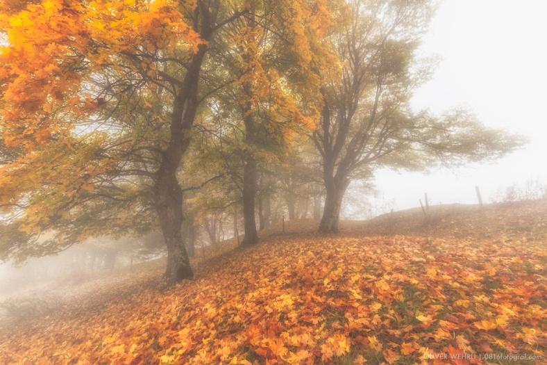 Fuji X-T1, Fujinon, Belchenflue, Jura, Nebel, Landschaft, Landschaftsfotografie,