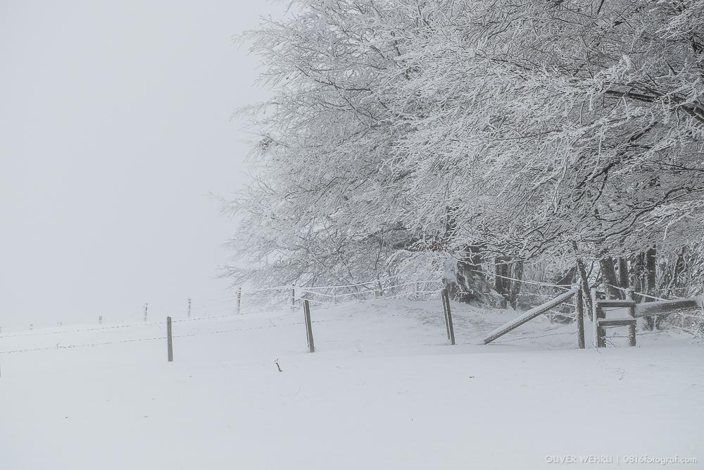 Emmental, Winter, Wintereinbruch, Schnee, Ahorn, Schneelandschaft, Landschaftsfotografie