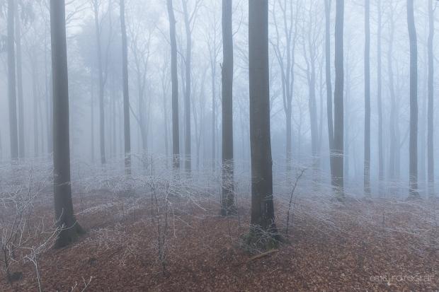 ein kalter Morgen im Jura Südfuss und dem in Nebel eingehüllten Winterwald. Aufnahme mit Fuji X-T1, 10-24mm