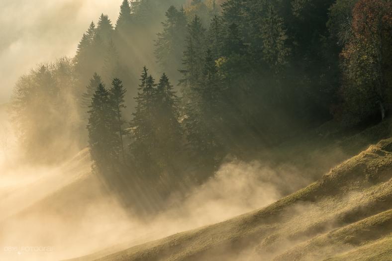 Nebelspiel mit Sonne