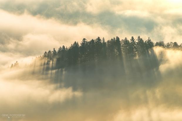 Passwan, Jura, Sonnenstrahlen im Nebelmeer
