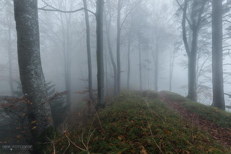 Wals auf Belchenflue im Nebel, Herbstfoto, Landschaftsfotografie