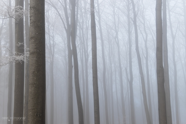 Wald, Nebel, Winter