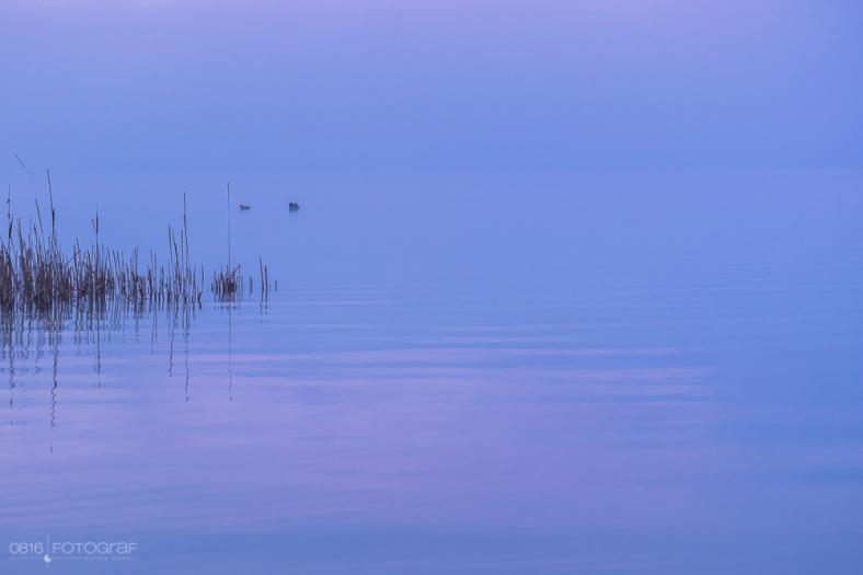 Morgen am Hallwilersee bei Nebel,