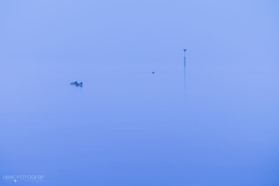Hallwilersee, Nebel, Morgennebel, Winter