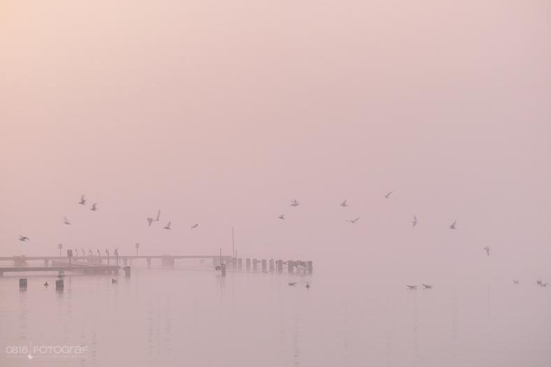 Seetal mit Hallwilersee, Morgennebel, Nebel, Wintermorgen