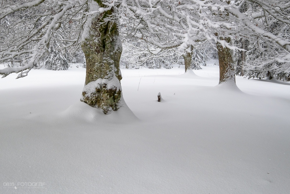 Schnee, winter, jura, grenchenberg, winterlich, neuschnee, landschaft, landschaftsfotografie,
