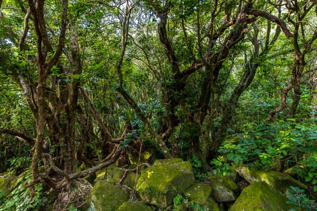 Neuseeland, Coromandel, Cathedral Cove, Wald, Urwald, Native Forest