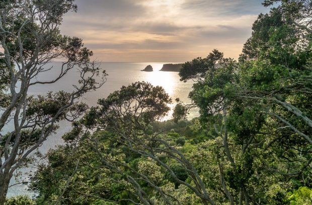 Grün, Coromandel, Neuseeland, Cathedral Cove