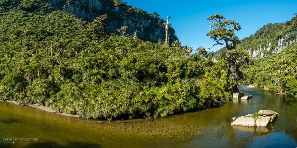 Westküste Neuseeland, Südinsel, Pororari River, Regendwald, New Zealand, Green Bush, Rainforest, Regenwald Neuseeland