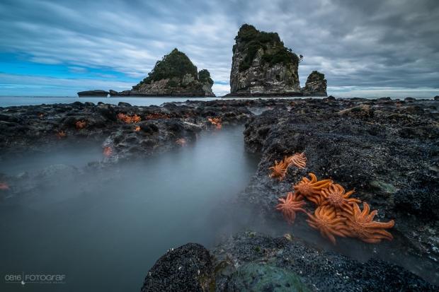 Seesterne, Starfish, Motukiekie Beach, Neuseeland, New Zealand, Beach, Felsen, Seascape