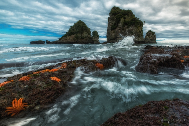 Seesterne, Starfish, Motukiekie Beach, Neuseeland, New Zealand, Beach, Felsen, Seascape