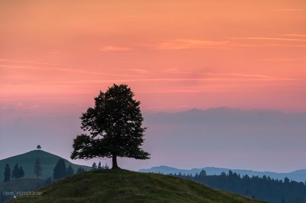 Emmental, Solitär, Ahorn, ahornalp, Sonnenuntergang, Fujifilm, Hügellandschaft, Hügel, einzelbaum, baum, eriswil, eriswil alp, emmentaler hügellandschaft sonnenuntergang, Solitärbaum, Einzelbaum