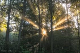Licht, Sonnenstrahlen, Wald, Herbstwald, Herbstvorboten, Herbstwald, Nebelwald, Nebel und Sonnenstrahlen, Aargau, Mittelland