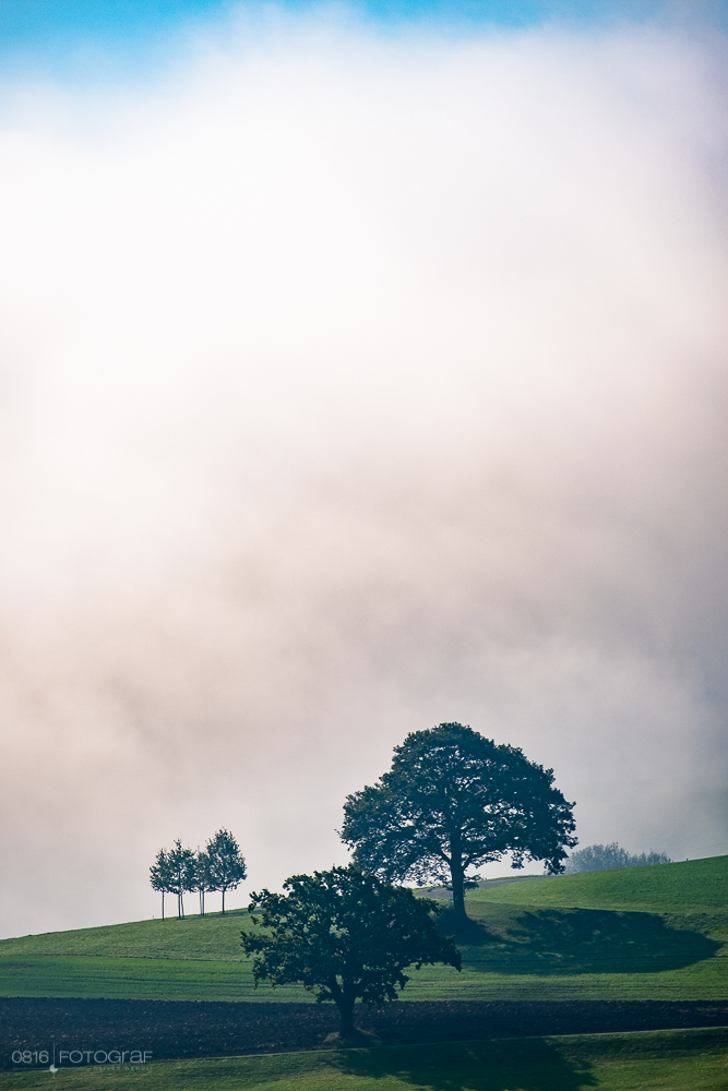 Licht, Sonnenstrahlen, Herbstvorboten, Herbstwald, Nebelwald, Nebel und Sonnenstrahlen