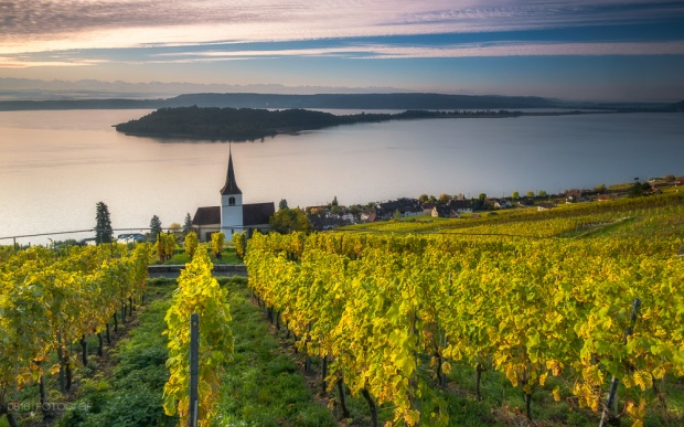 Kirche, Ligerz, Rebberge, Herbst, Morgen, Sonnenaufgang, Kirchlein von Ligerz, Bielersee, Weinberge, Reben, gelbe Reben, Rebberge im Herbst