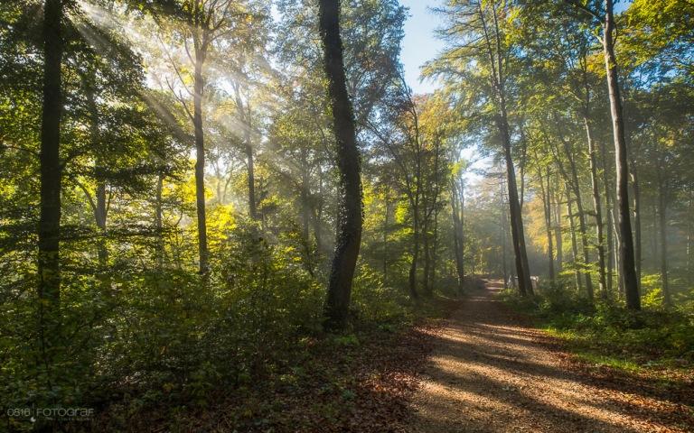 Herbst, Wald, Aargau, herbstwald, Jura, Jura Südfuss, Gisliflue, Laub, Herbstlaub, Nebel