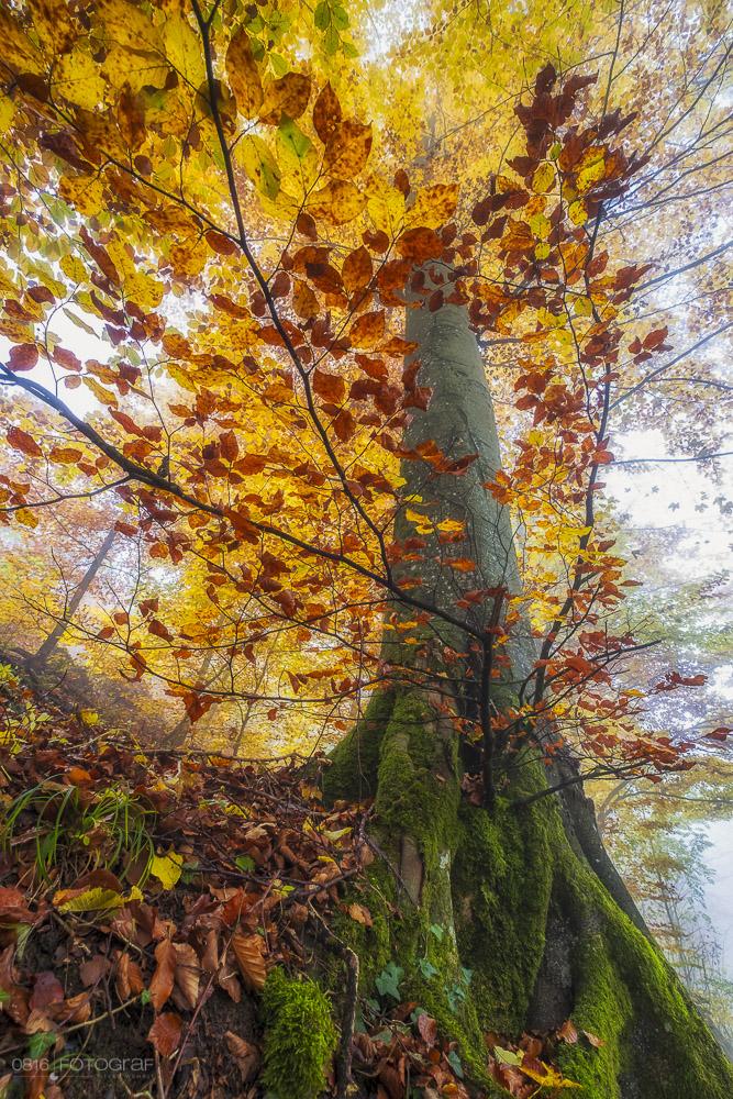 Gisliflue, Aargau, Jura, Schweizer Jura, Fujifilm, Fujifilm XPro2, Fuji, Indian Summer, Morgen, Herbstmorgen, Herbstlaub, Herbstfarben, Swiss Jura, Mittelland, Landschaftsfotografie, Landschaftsfotograf