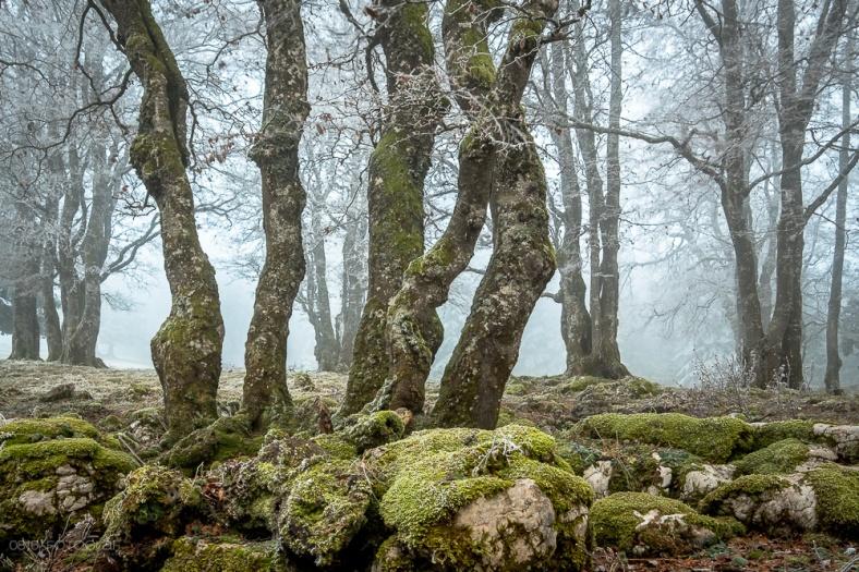 Creux-du-Van, Jura, Neuenburger Jura, Sturmnebel, Sturmbise, Nebelschwaden, Nebel, Landschaftsfotografie, Fujifilm X-Pro2, Fujifilm, Bäume, Wald,