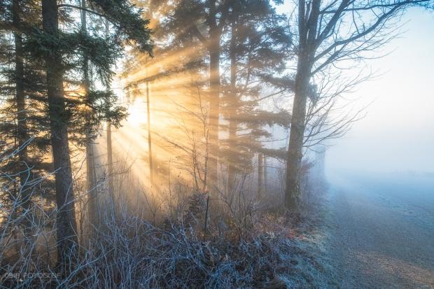 Nebel, Wald, Winter, Sonnenstrahlen, Morgen, Wasserflue, Aargau, Jura, Schweiz, Landschaftsfotografie, Oliver Wehrli, Fujifilm, Fuji X-Pro2