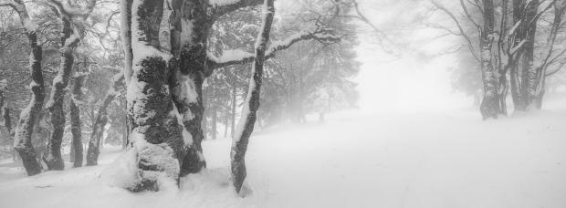 fine art winterfoto, fine art landscapes, gfx landscape photography, fujifilm gfx photography, gfx landschaftsfotografie, creux-du-van, neuenburger jura, schweizer landschaftsfoto winter, winter im jura, Winterwald, winter, landschaftsbild schweiz, winter landschaftsfoto, landschaftsfotograf, landscapes, swiss jura, swiss landscapes,