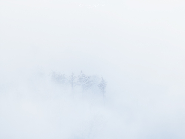 winter, nebel, aargau, landschaftsfotografie